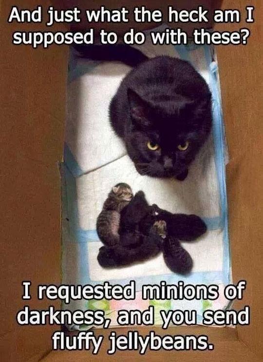 funny-cat-box-kitties-cute