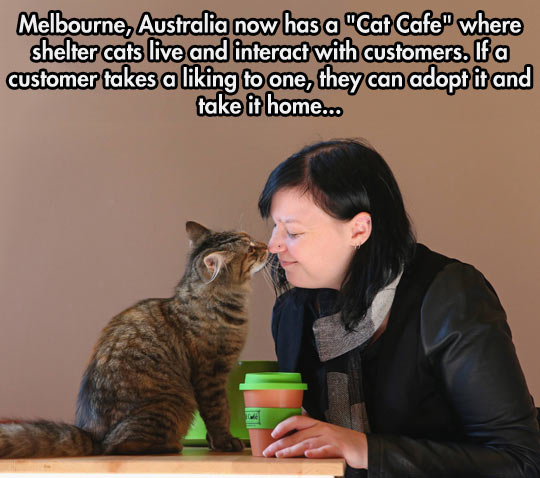 Cat Cafe In Melbourne
