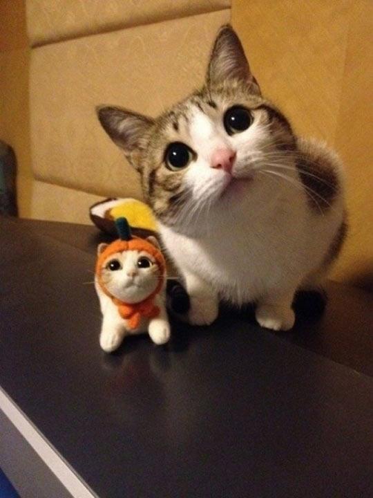 funny-cat-cute-pumpkin-toy