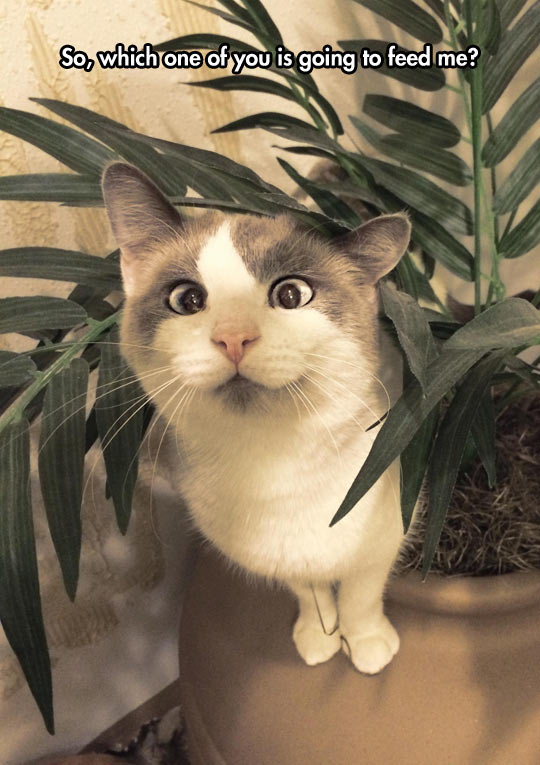 funny-cat-face-wondering-plant