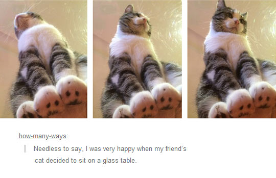 Cats Are Cute From Every Angle