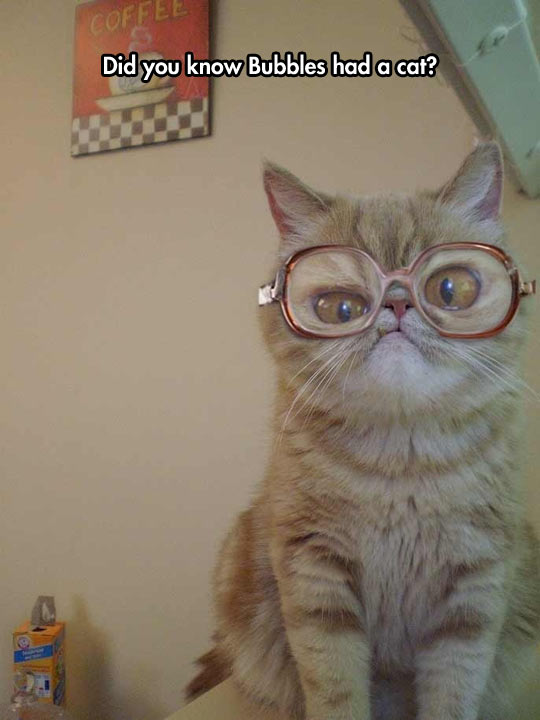 This Cat Was Born To Wear Those Glasses