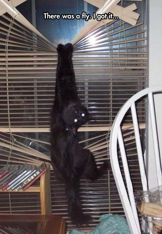 funny-cat-hanging-windows-fly