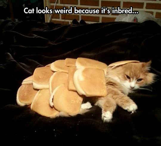 funny-cat-laying-bread
