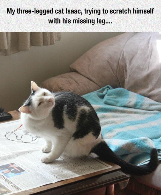 Cat with 3 legs