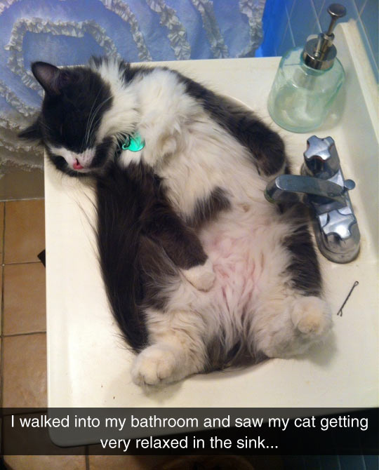 Relaxing In The Sink