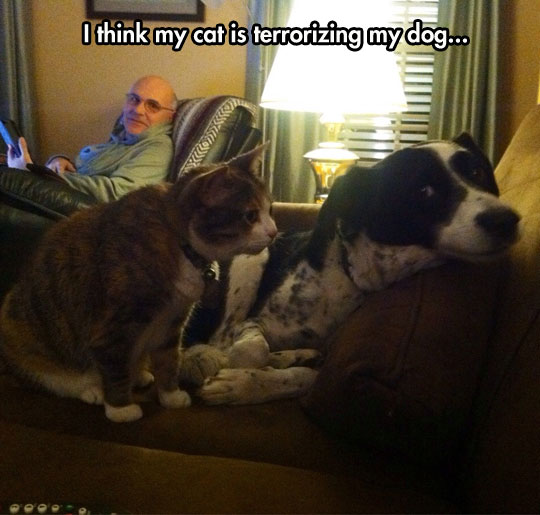 funny-cat-threatening-dog-couch