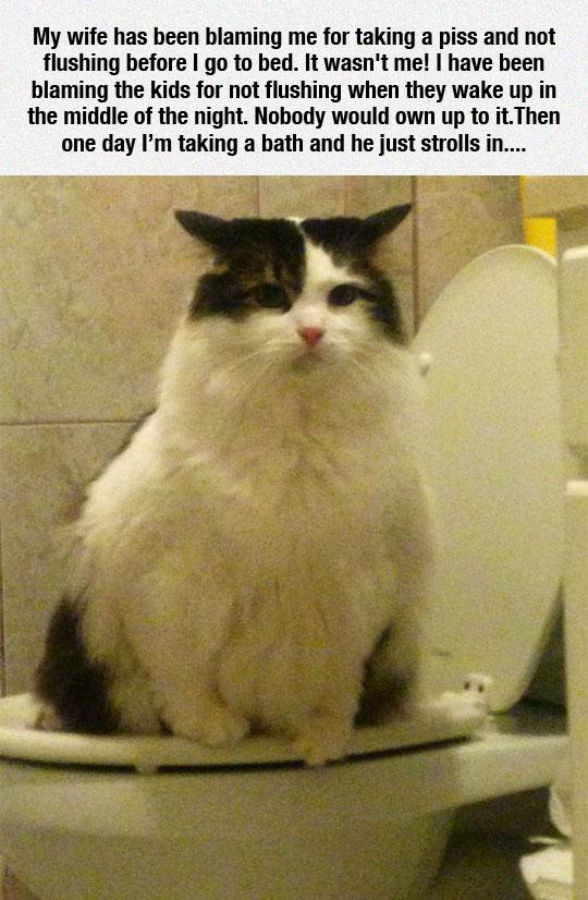 funny-cat-toilet-bathroom-night