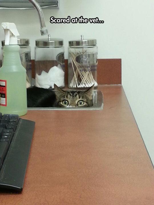 funny-cat-vet-scary-hidden-sink
