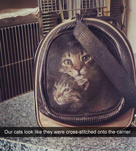 funny-cats-carrier-cross-stitched