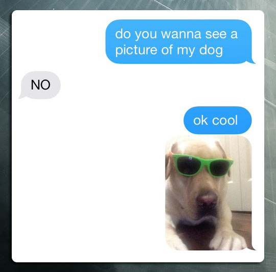 funny-cool-dog-glasses-message