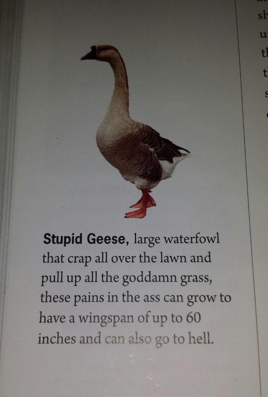 funny-dictionary-Geese-description