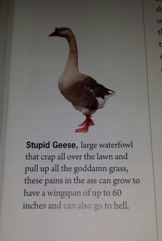 The Real Truth About Geese
