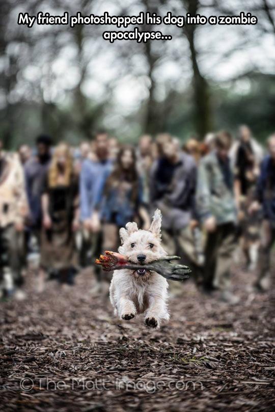 The Barking Dead