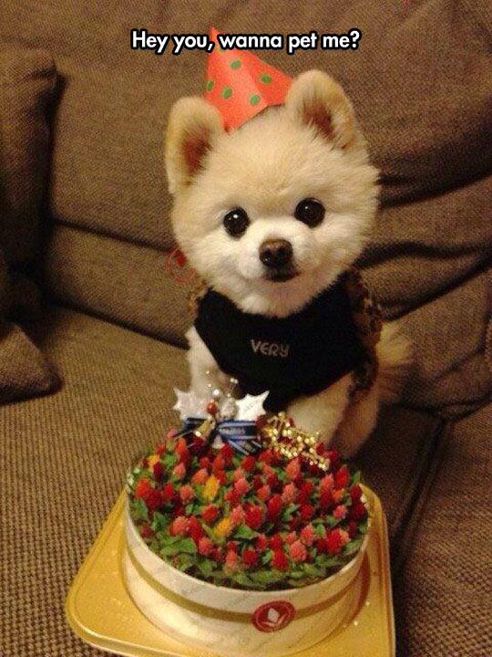 Happy Birthday Cutie