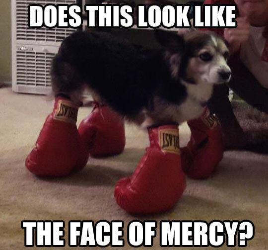 funny-dog-boxing-globe-feet