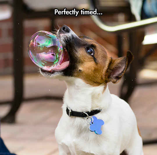funny-dog-bubble-perfect-timing