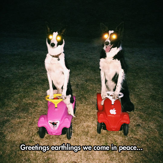 We Have Come For Your Squeaky Toys