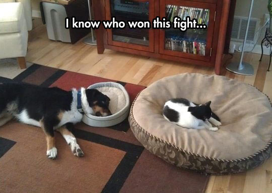 Cats Always Win