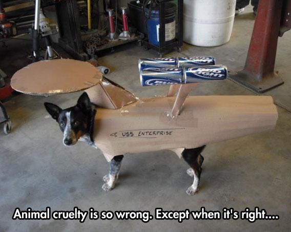 funny-dog-costume-Star-Trek-ship