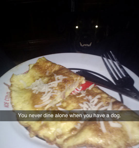 dog watching food