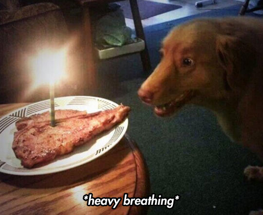 funny-dog-face-meat-cake