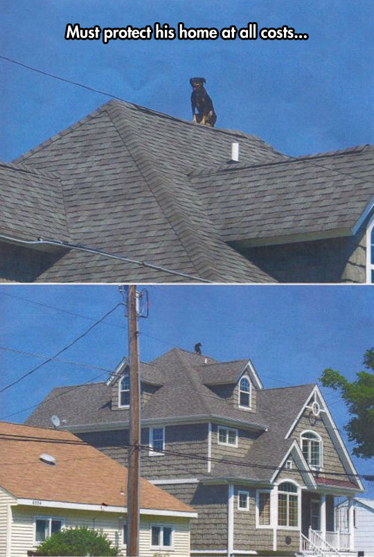 funny-dog-house-roof-over