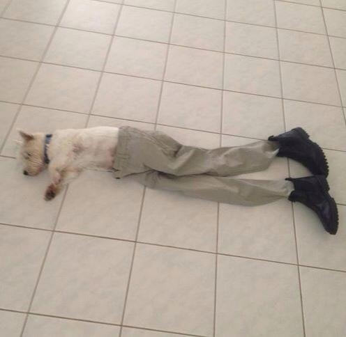 funny-dog-laying-pants-shoes