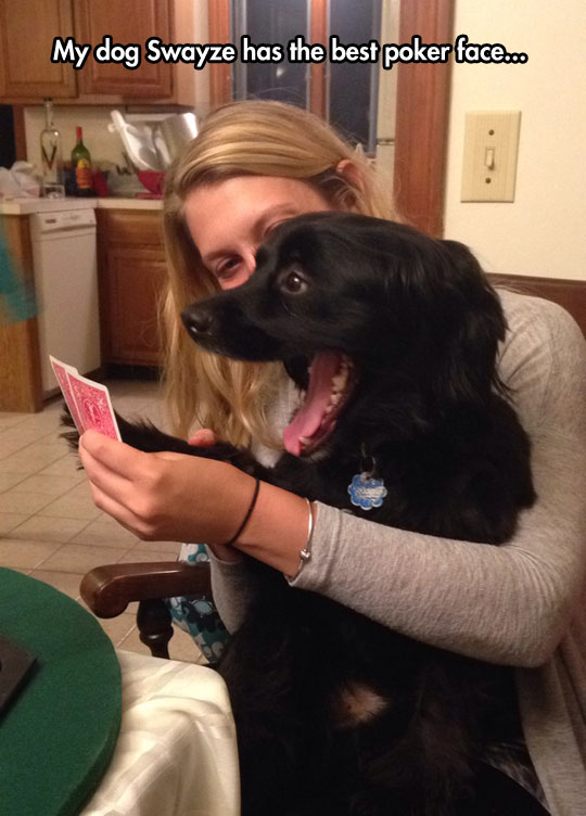 Playing Poker With Dog