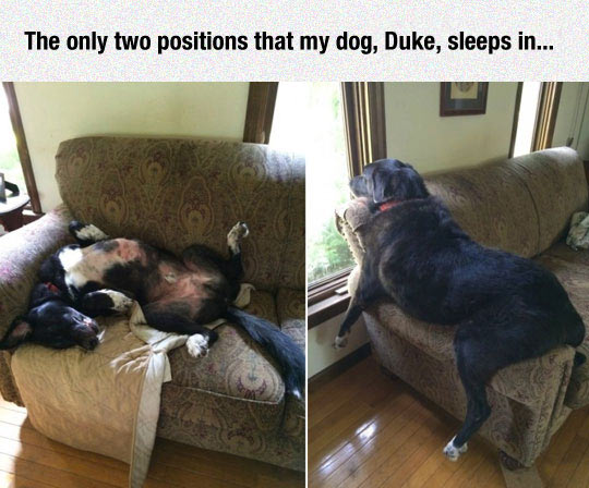 funny-dog-positions-sleeping-couch