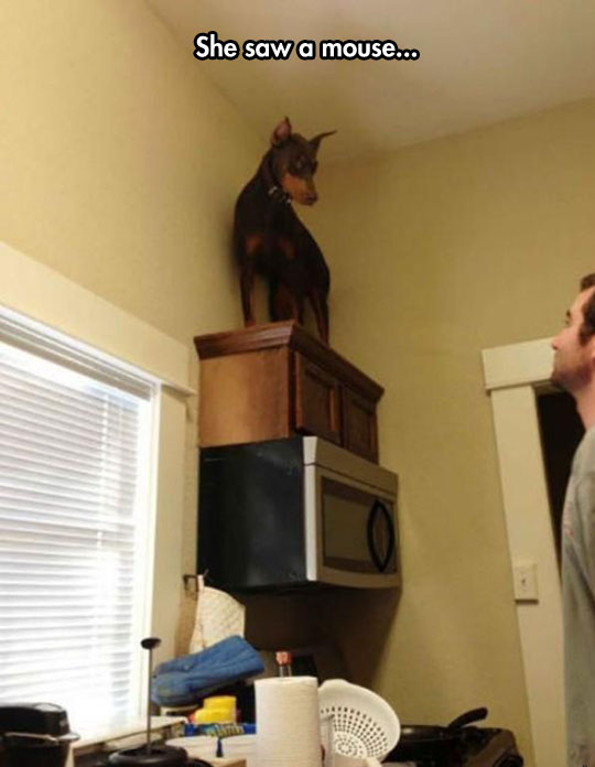 funny-dog-scared-counter-top