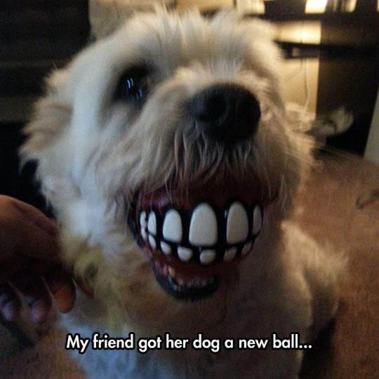 funny-dog-teeth-toy-ball