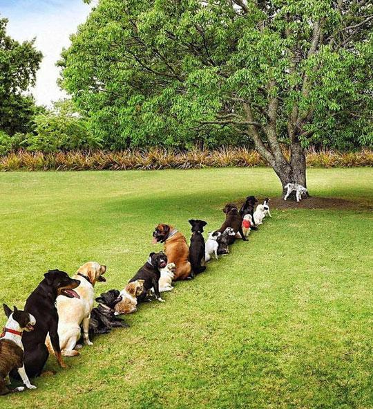Deforestation Is Hitting Hard On The Dog Community