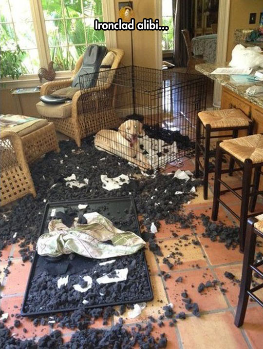 funny-dogs-cage-break-living