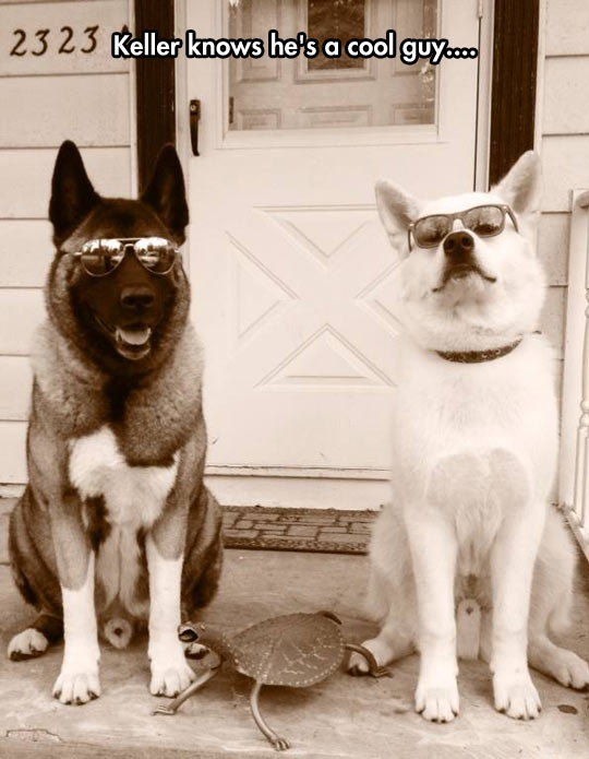 Good Looking Dogs