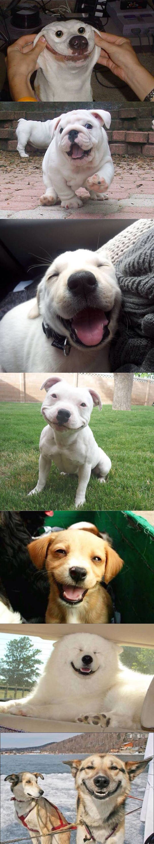 funny-dogs-smiling-happy-cute-pet