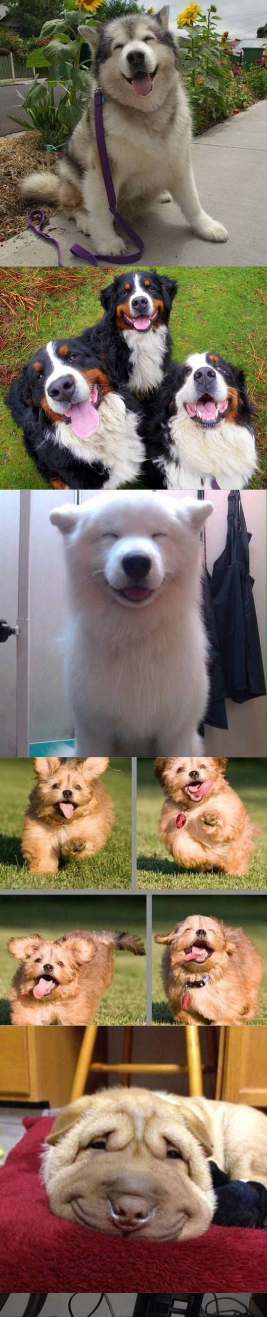 funny-dogs-smiling-happy-cute
