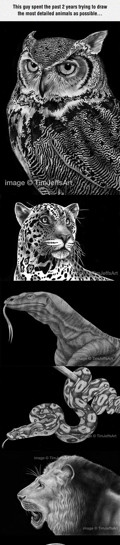 Amazingly Detailed Drawn Animals