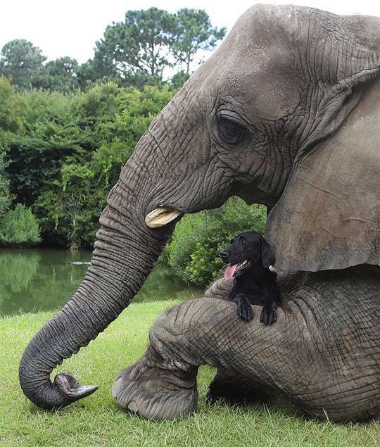 funny-elephant-dog-hug-friends