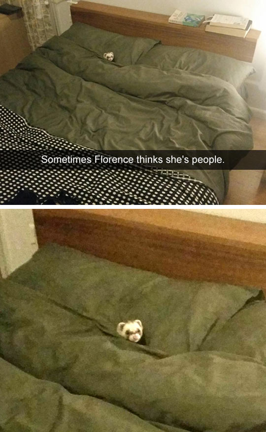 That Bed Does Look Comfy