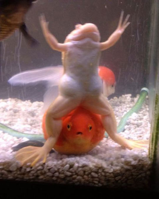 Helping The Frog To Lift