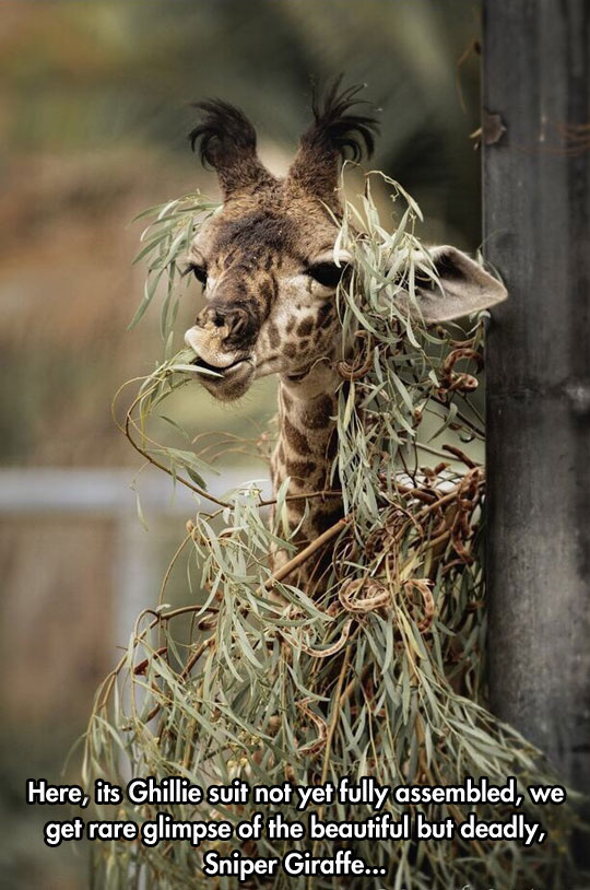 The Deadly Sniper Giraffe