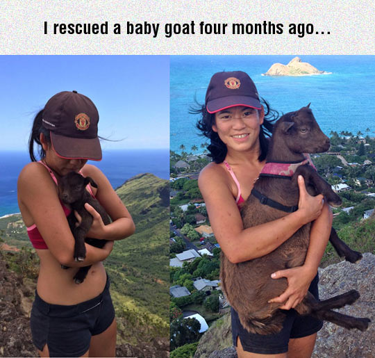 Rescuing A Baby Goat