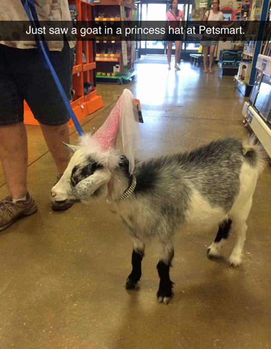 funny-goat-princess-costume