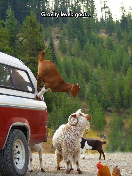 Goats Don