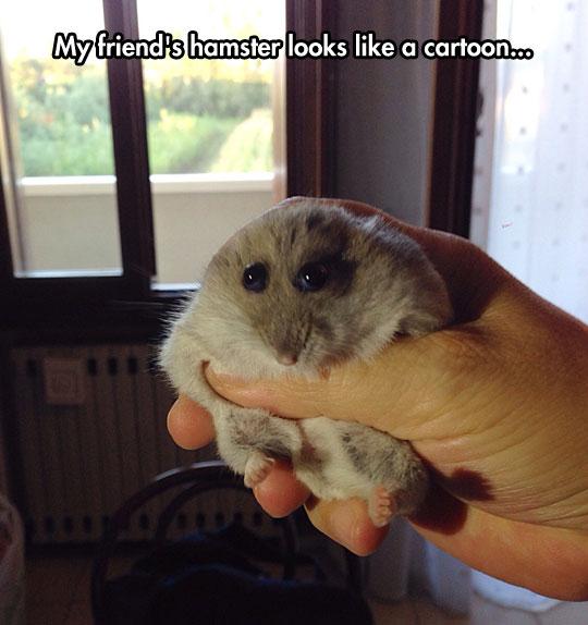 funny-hamster-cartoon-like-eyes-popping
