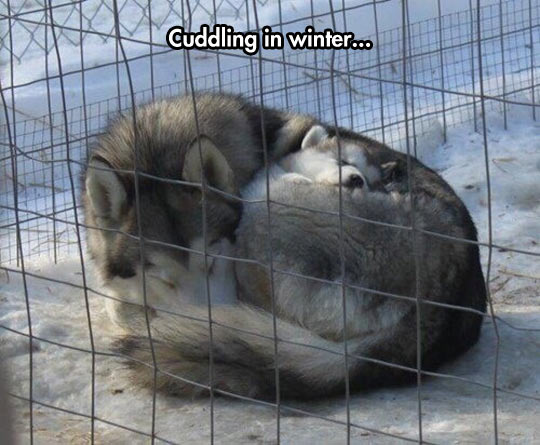 funny-husky-mother-baby-cold-cage