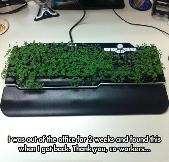 Eco Friendly Keyboard