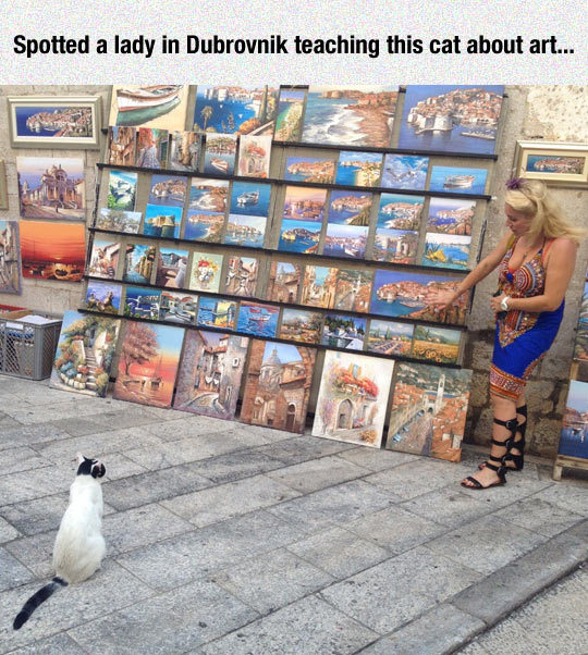 Cats Are Good Listeners