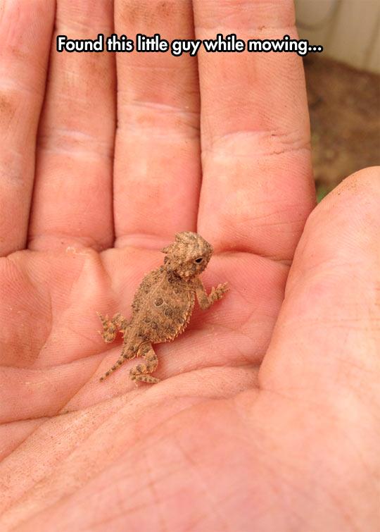 funny-little-lizard-cute-hand-size